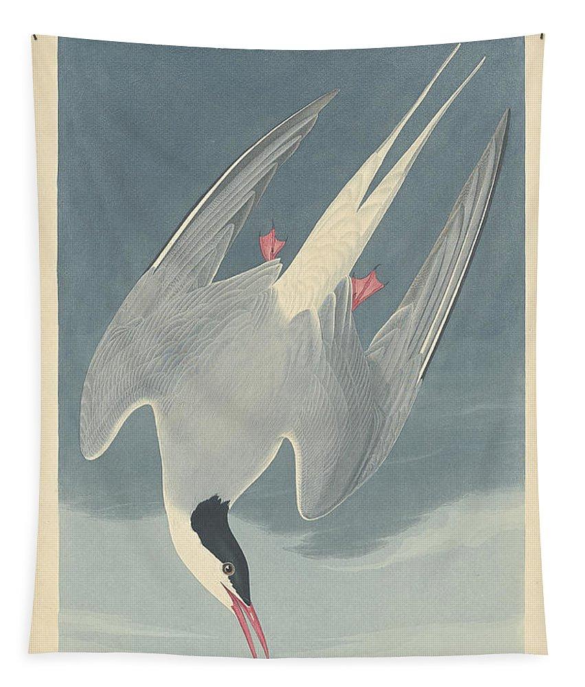 John James Audubon Tapestry featuring the painting Arctic Tern by John James Audubon