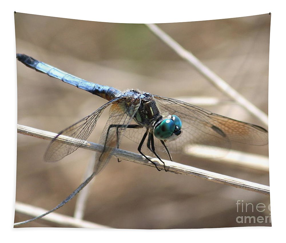 Dragonfly Tapestry featuring the photograph Big Blue by Carol Groenen
