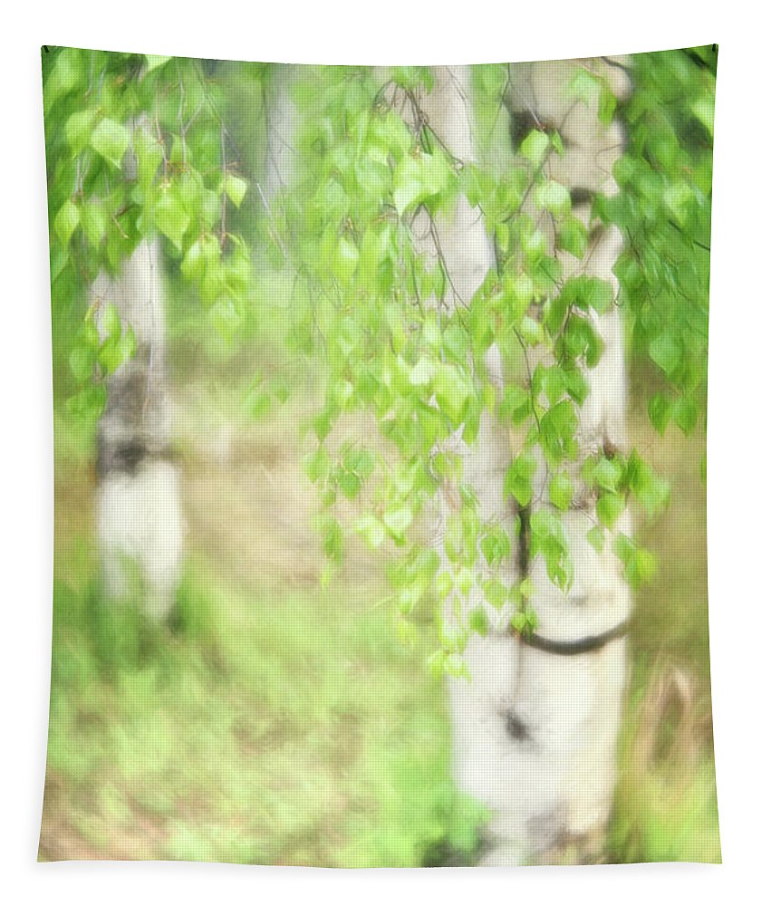 Green Tapestry featuring the photograph Birch In Spring by Priska Wettstein