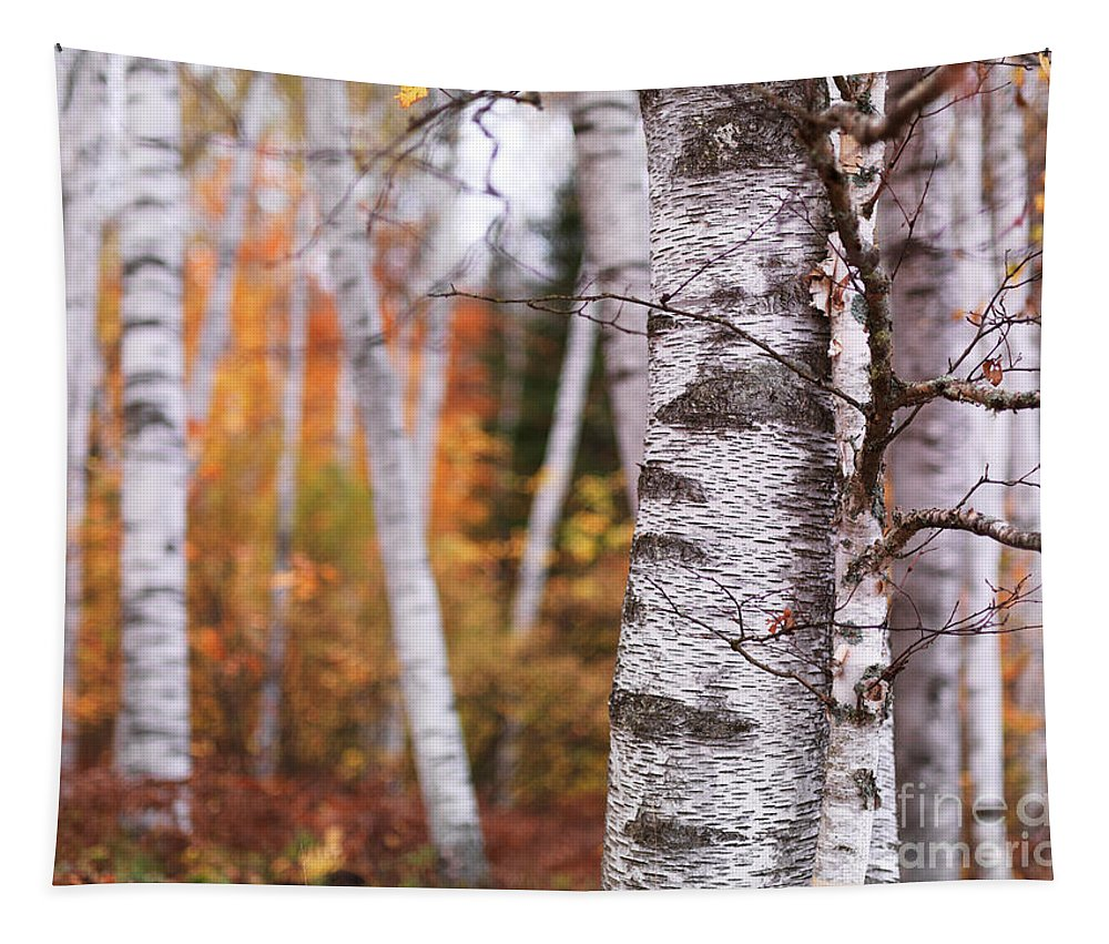 Birch Trees Tapestry featuring the photograph Birch Trees Fall Scenery by Oleksiy Maksymenko