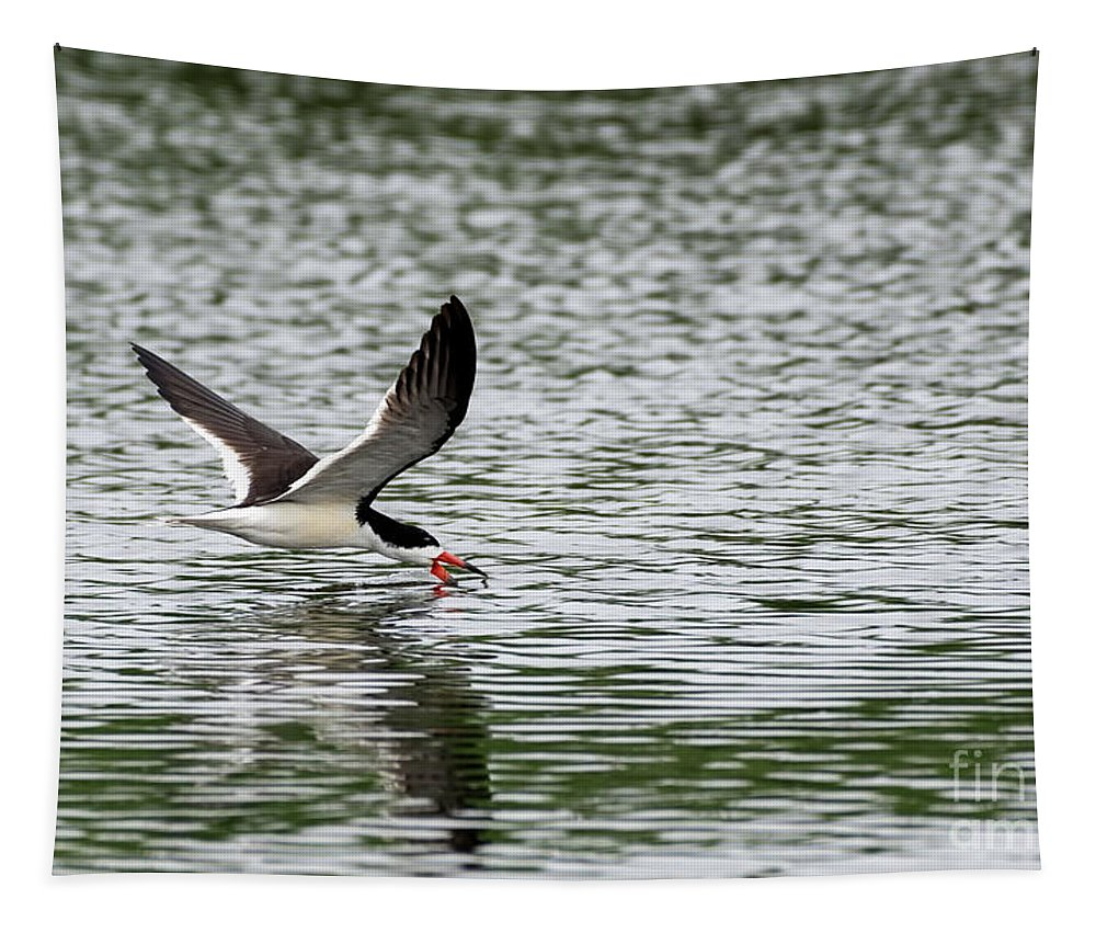 Skimmer Tapestry featuring the photograph Black Skimmer Fishing by Sam Rino