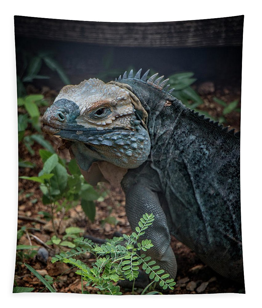 Grand Cayman Tapestry featuring the photograph Blue Iguana by Teresa Wilson