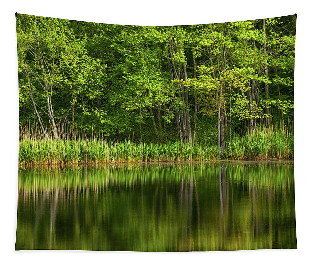 Green Tapestry featuring the photograph Calming Trees by Karol Livote