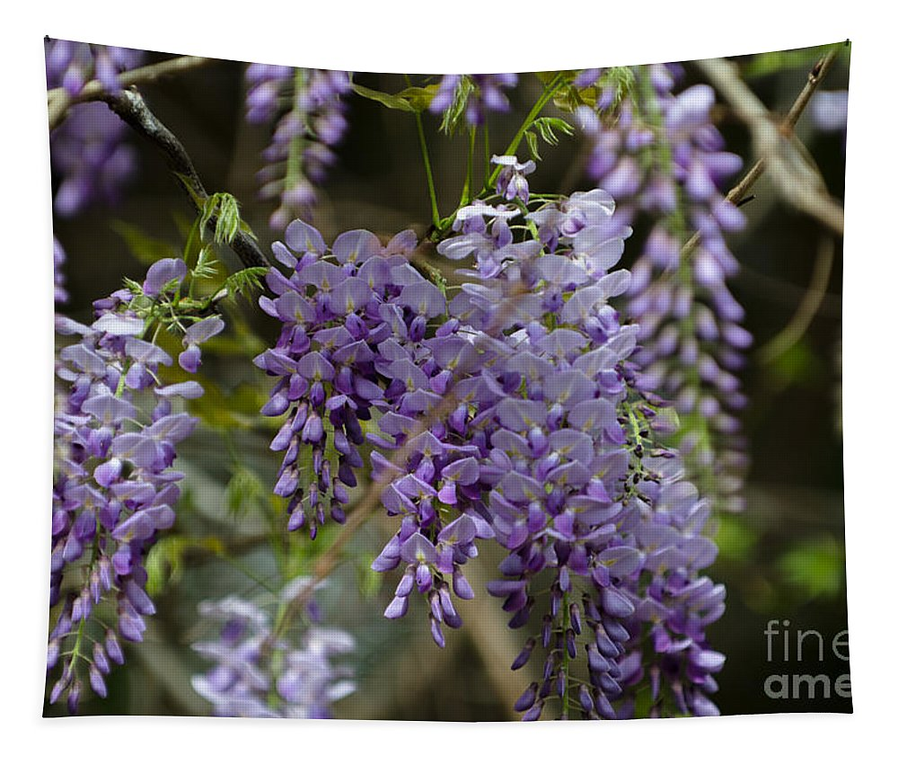 Wisteria Tapestry featuring the photograph Charleston In The Spring by Dale Powell