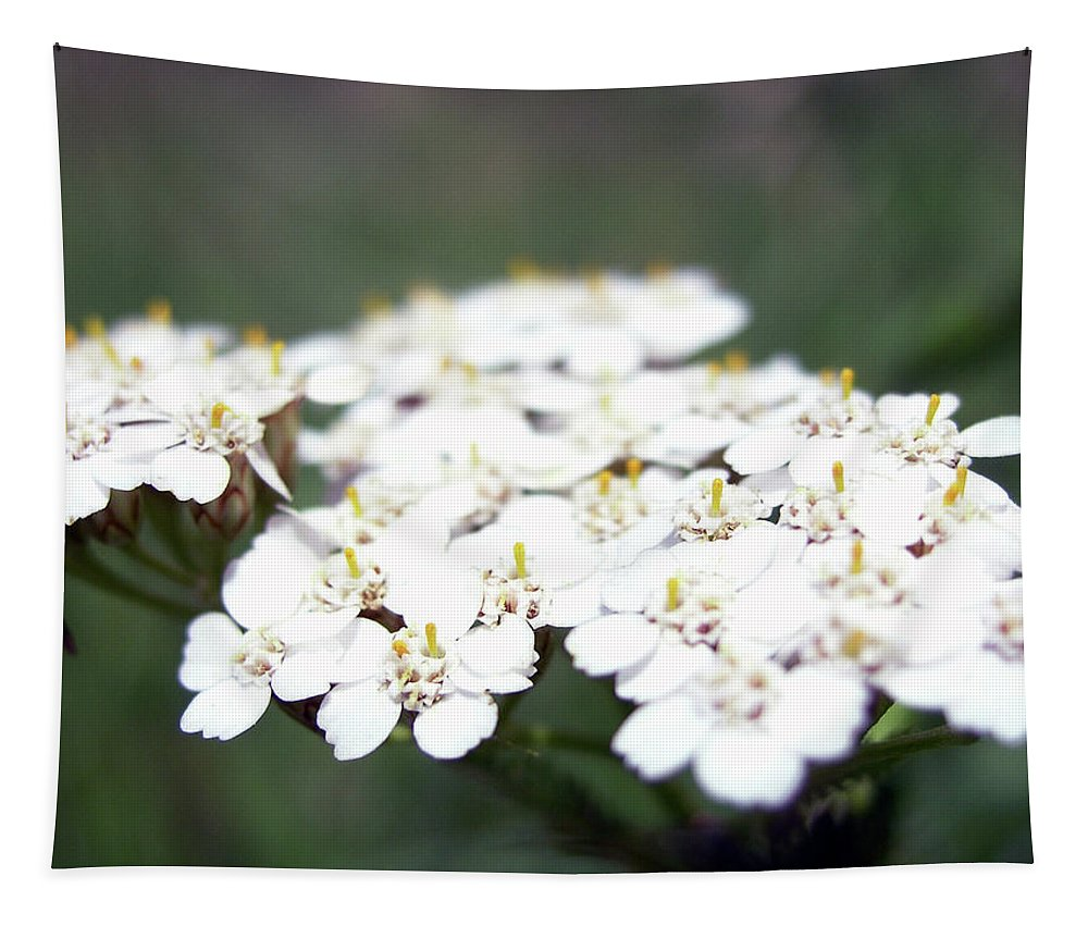 Photo Tapestry featuring the photograph Close-ups Of A White Meadow Flower by PM Artistic