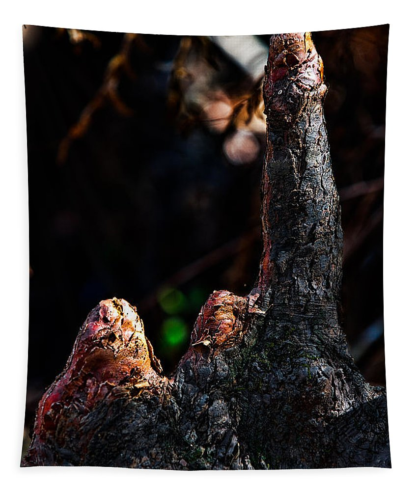 Nature Tapestry featuring the photograph Cypress Knees by Christopher Holmes