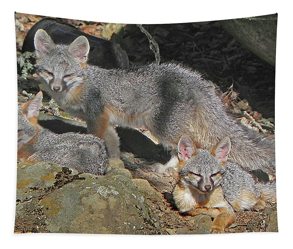 Gray Fox Tapestry featuring the photograph D-a0072 Fox Family On Our Mountain by Ed Cooper Photography