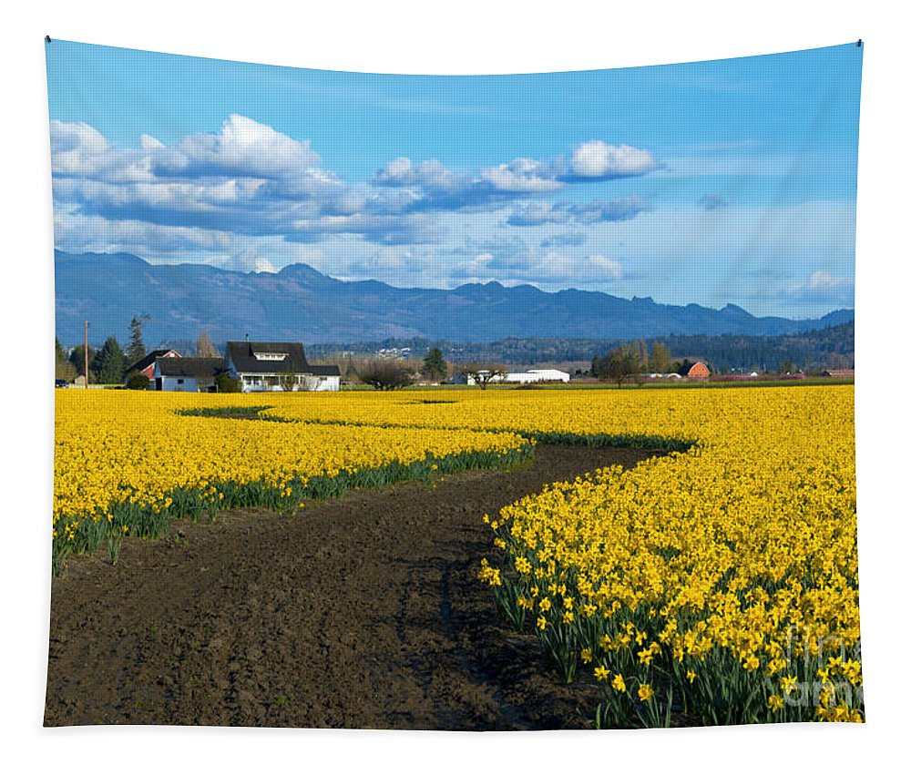 Daffodils Tapestry featuring the photograph Daffodil Lane by Mike Dawson