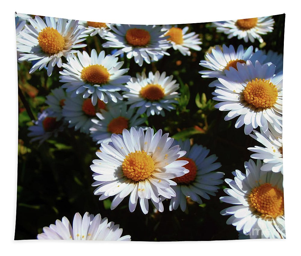 Daisy Tapestry featuring the photograph Daisies by Nina Ficur Feenan