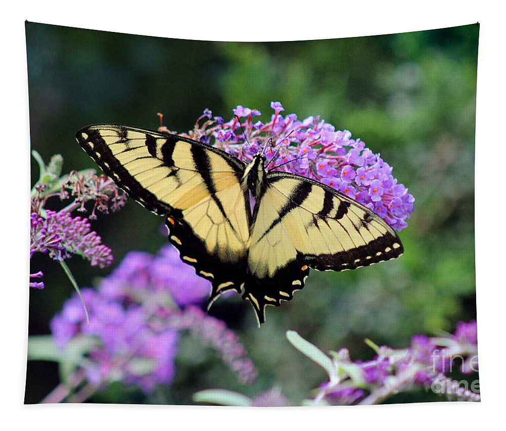 Tiger Tapestry featuring the photograph Eastern Tiger Swallowtail Butterfly 2015 by Karen Adams