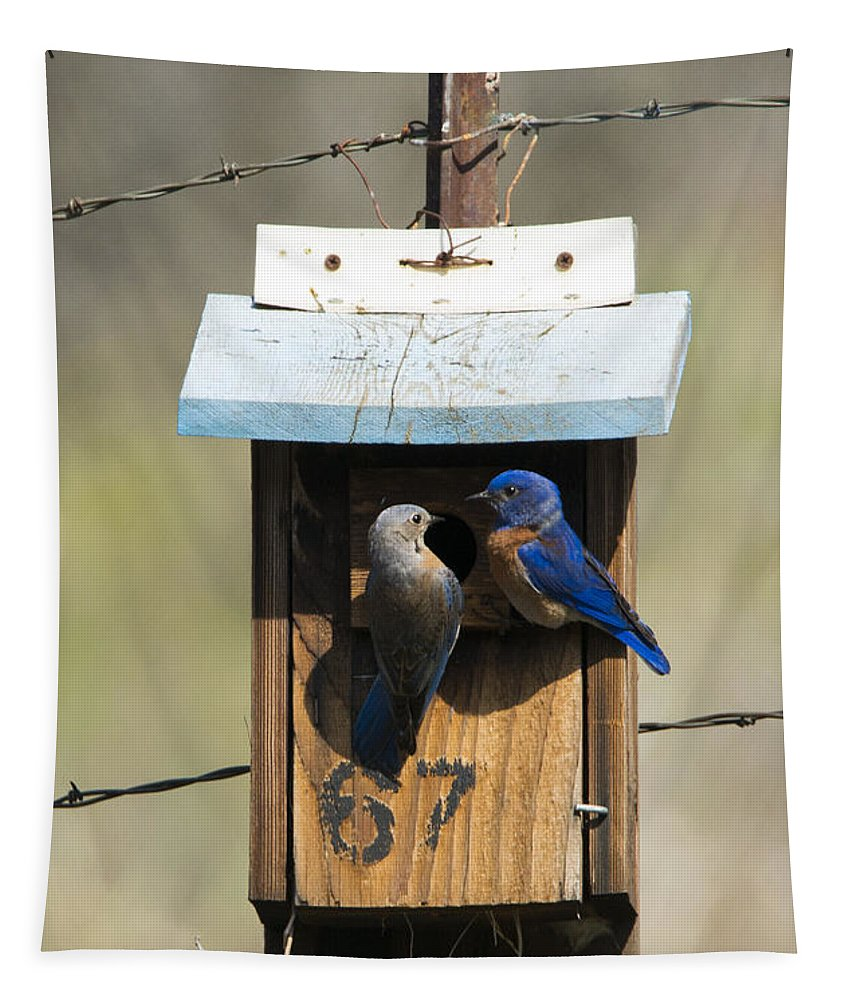 Western Bluebirds Tapestry featuring the photograph Family Time by Mike Dawson