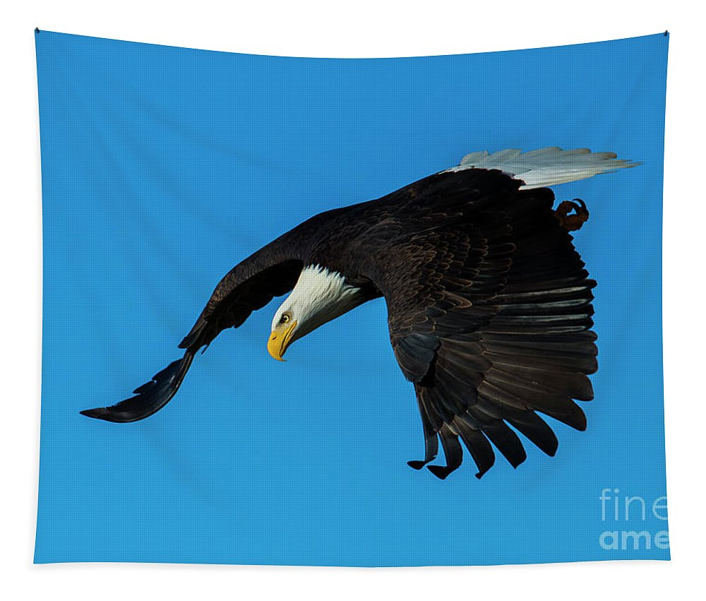 Bald Eagle Tapestry featuring the photograph Focused by Mike Dawson