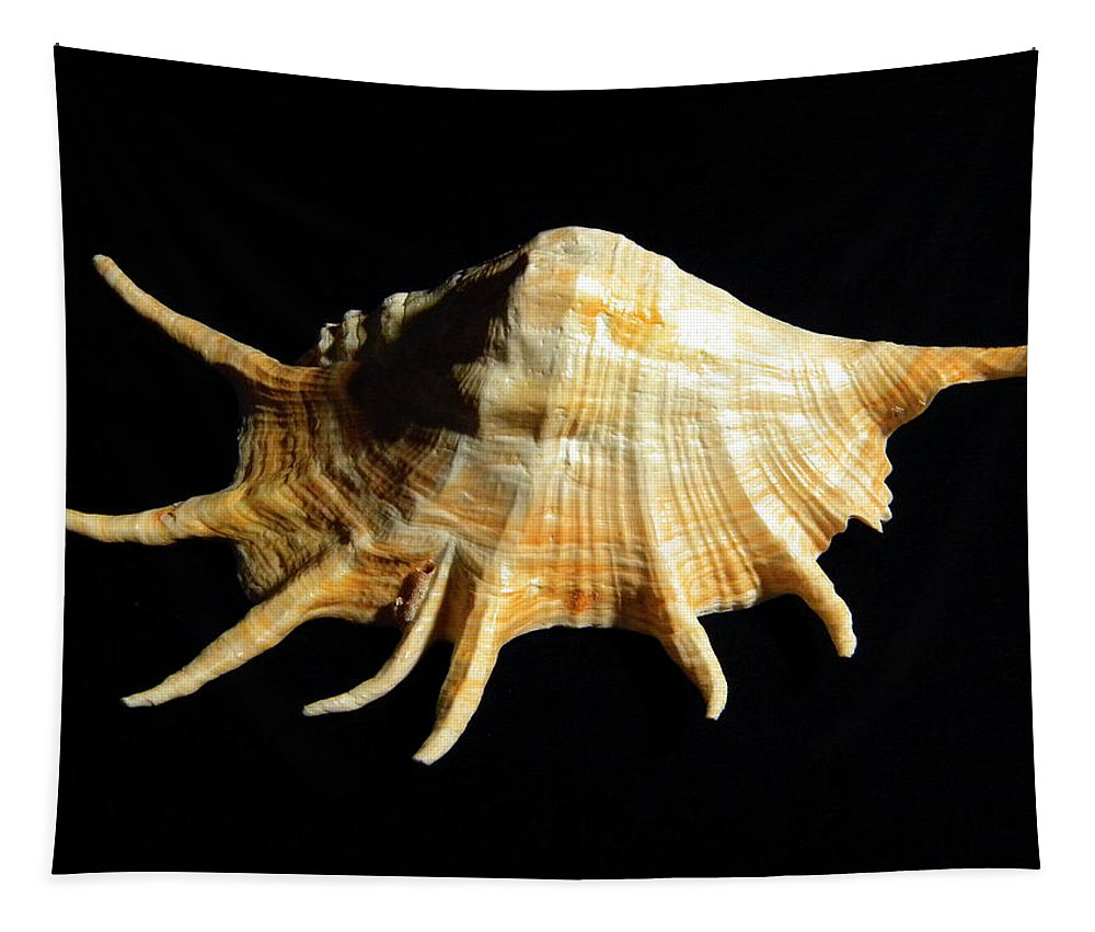 Lambis Truncata Tapestry featuring the photograph Giant Spider Conch Seashell Lambis Truncata by Frank Wilson