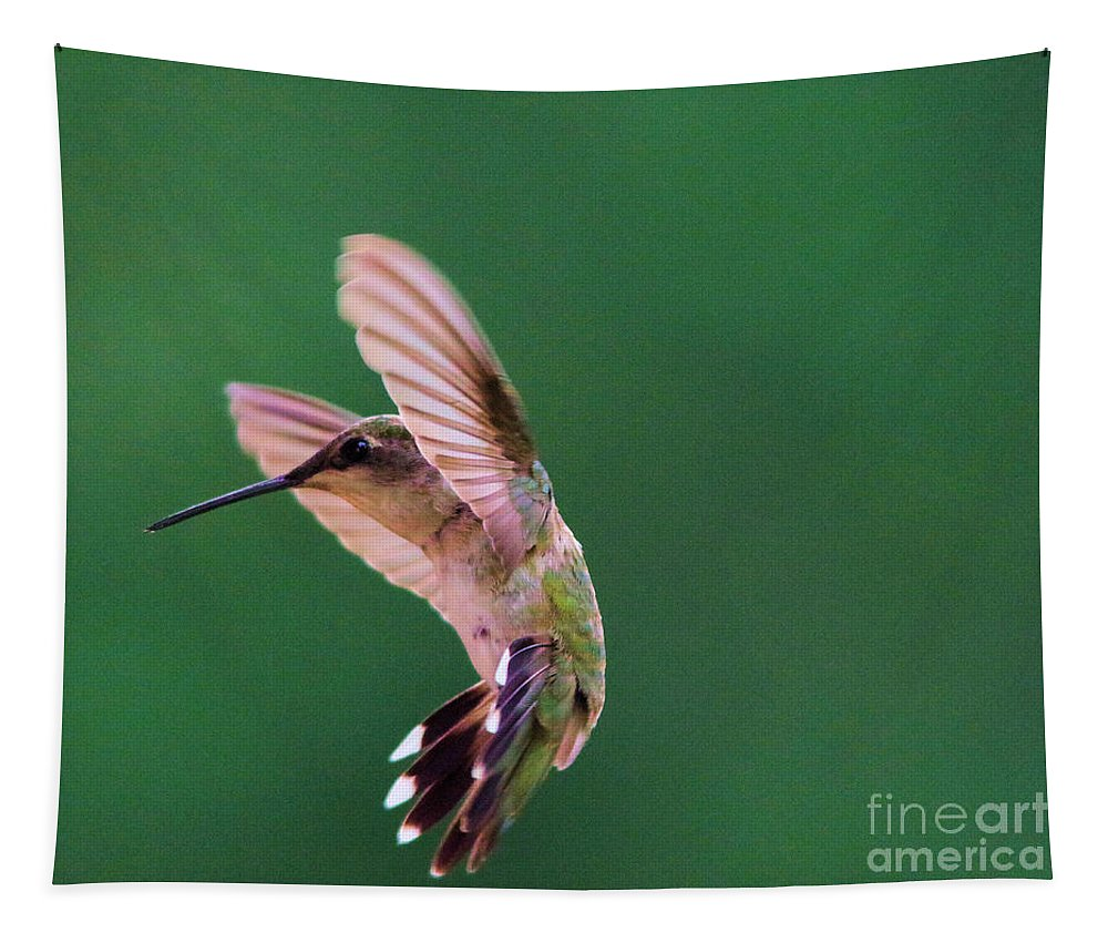 Bird Tapestry featuring the photograph Grace Of A Hummingbird by Jeff Swan