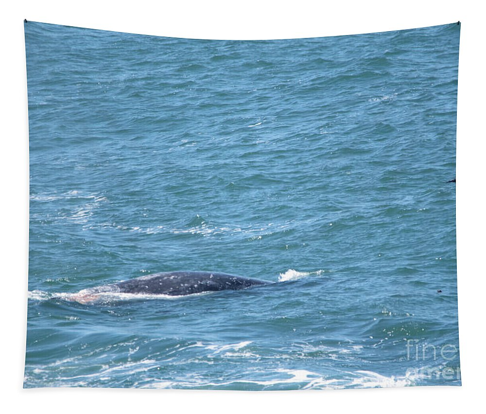 Whale Tapestry featuring the photograph Gray Whale by Jeff Swan