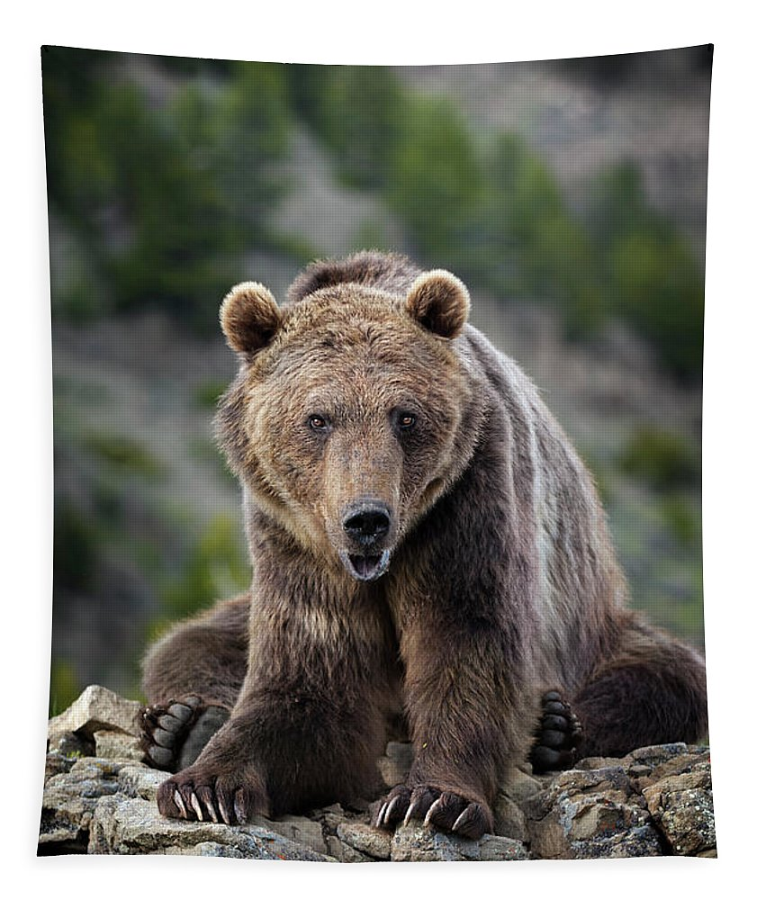 Grizzly Tapestry featuring the photograph Grizzly Bear by Wildlife Fine Art