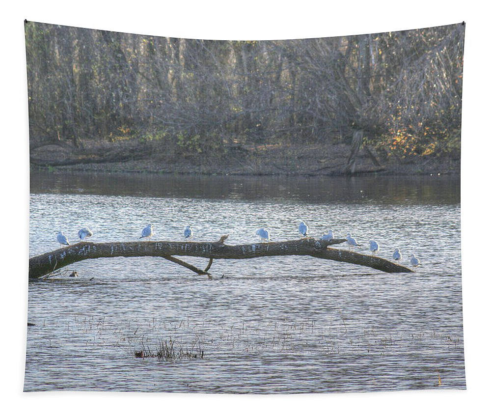 Gulls Tapestry featuring the photograph Gulls by Michael Munster