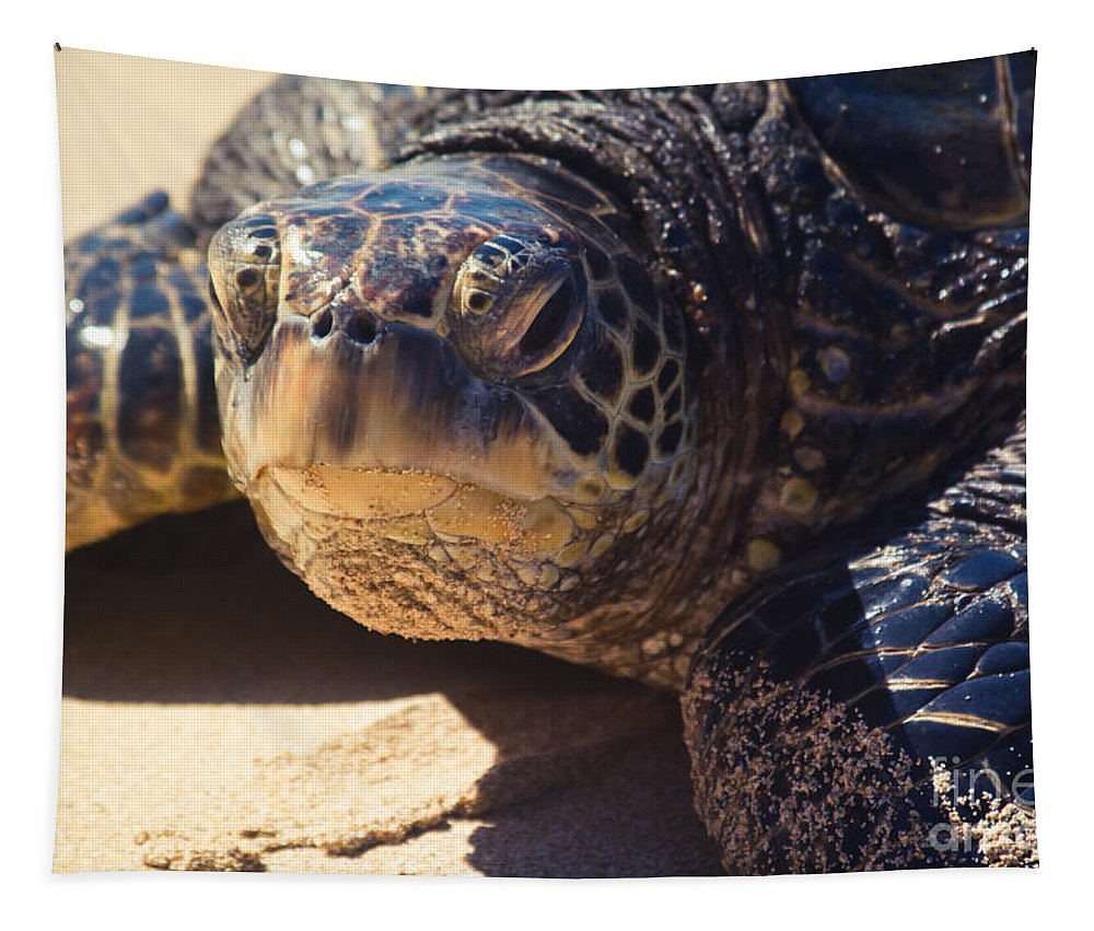 Tapestry featuring the photograph Honu by Sharon Mau