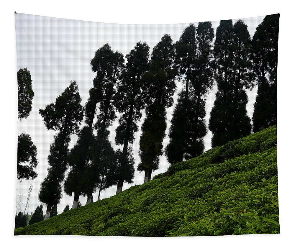 Pine Tapestry featuring the photograph In A Line by Nilu Mishra