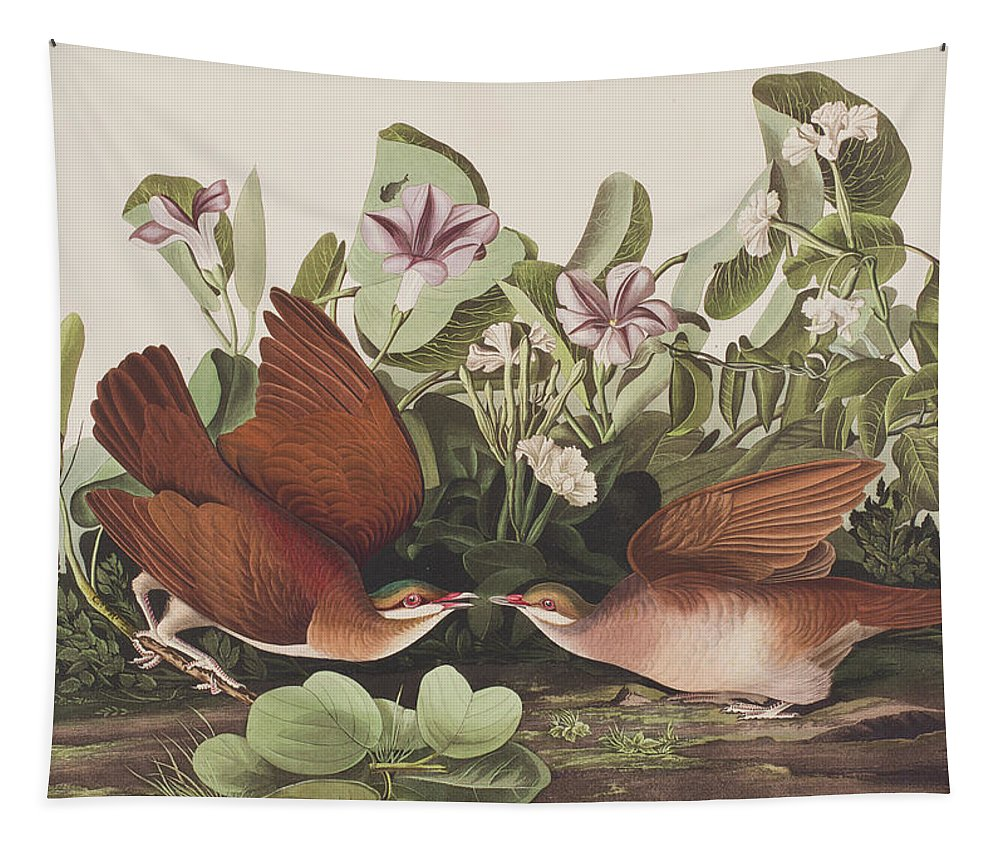 Key West Dove Tapestry featuring the painting Key West Dove by John James Audubon