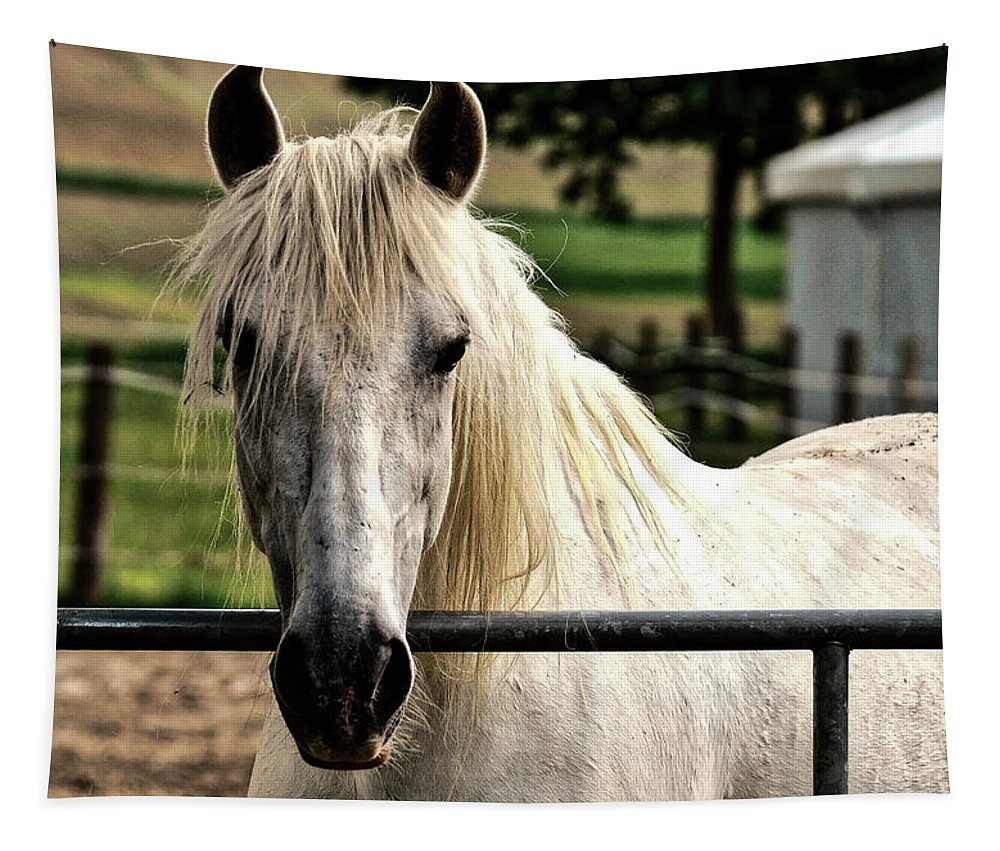 Horse Tapestry featuring the photograph Love At First Sight by Pixabay