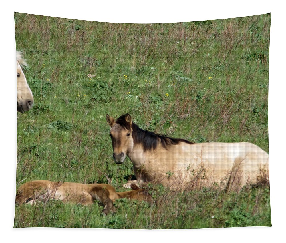 Horse Tapestry featuring the photograph Mare And Colt by Jeff Swan