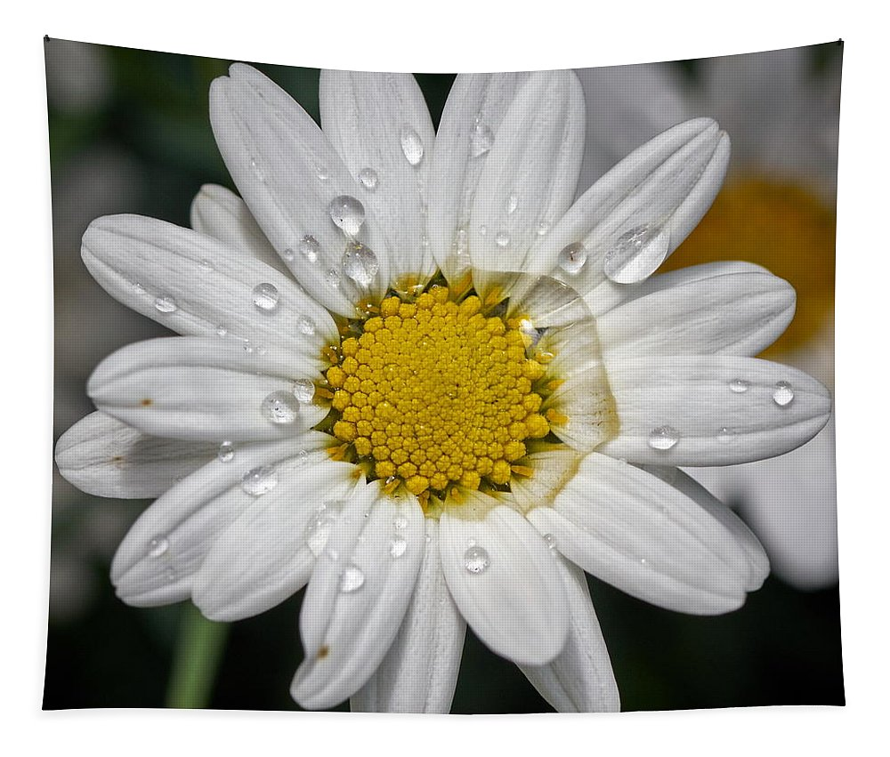 Finland Tapestry featuring the photograph Marguerite Daisy by Jouko Lehto