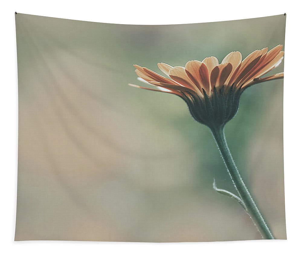 Marigold Tapestry featuring the photograph Marigold by Pixabay