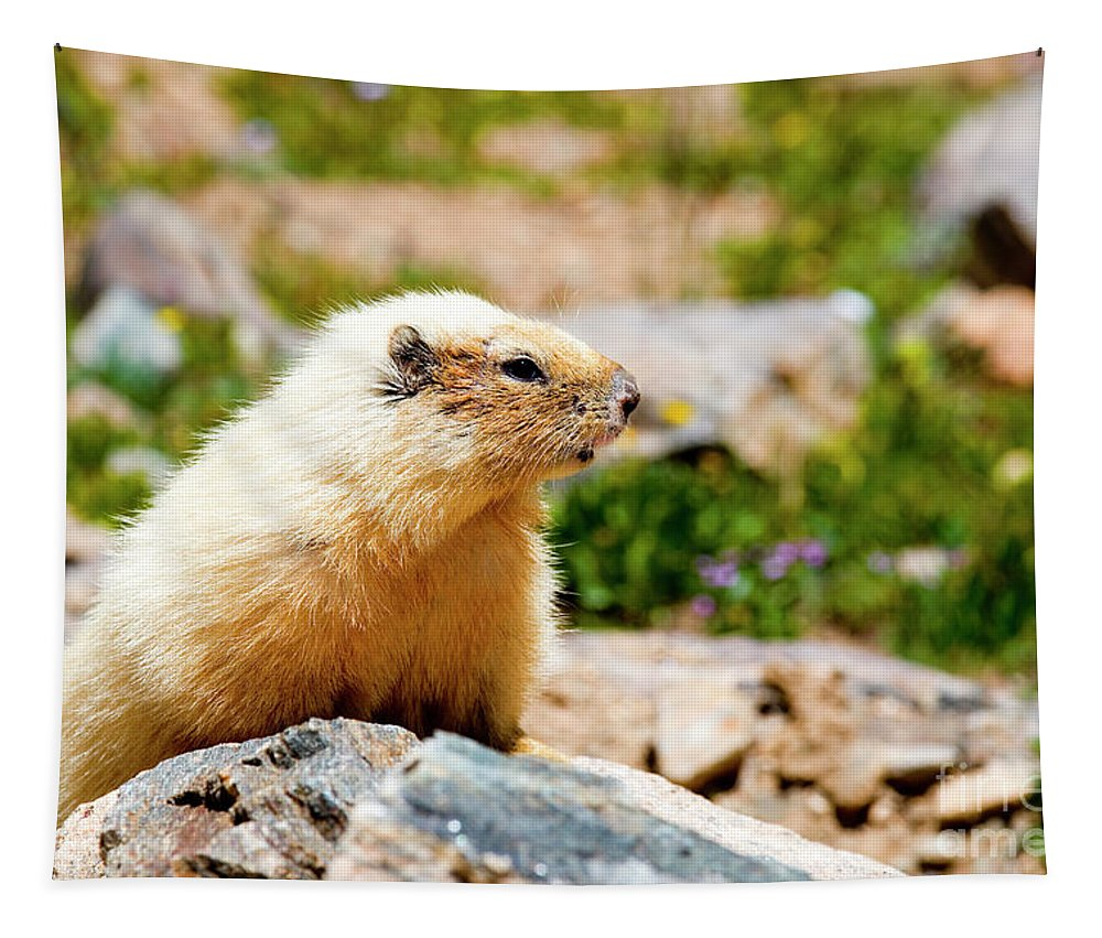 Marmot Tapestry featuring the photograph Marmot On Mount Massive Colorado by Steve Krull