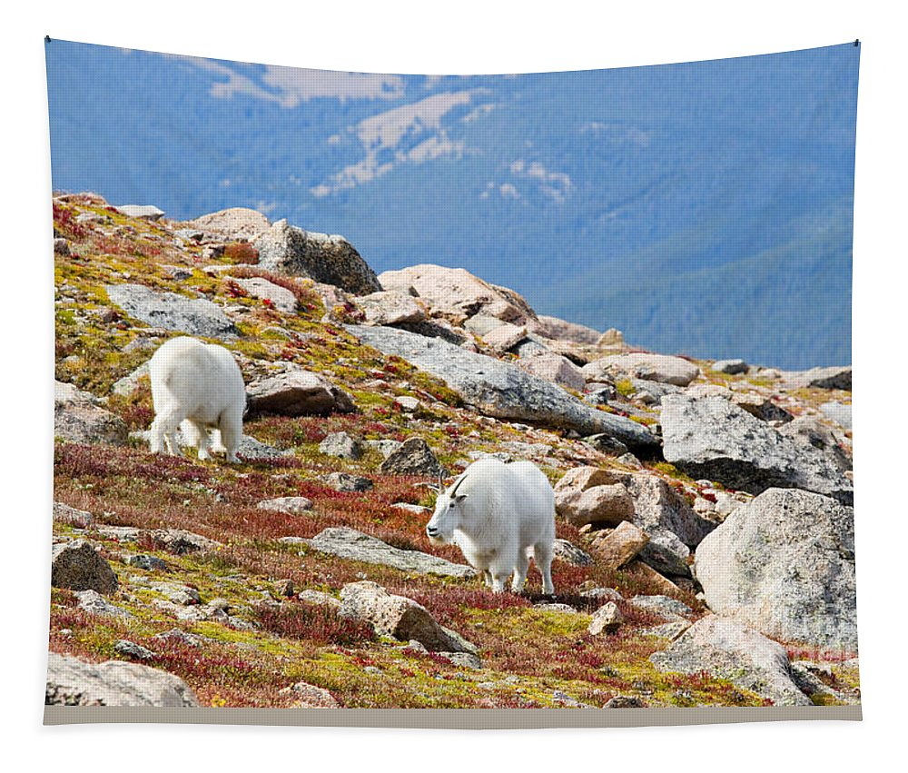 Goat Tapestry featuring the photograph Mountain Goats On Mount Bierstadt In The Arapahoe National Forest by Steve Krull