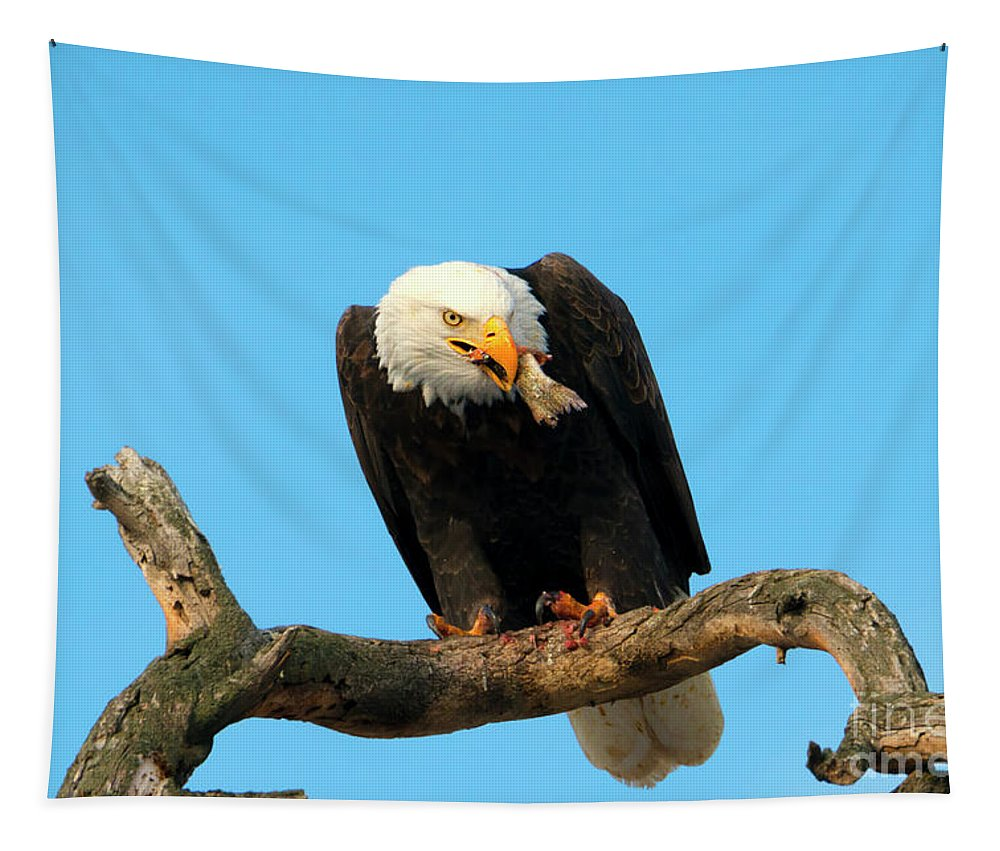 Bald Eagle Tapestry featuring the photograph My Dinner by Mike Dawson