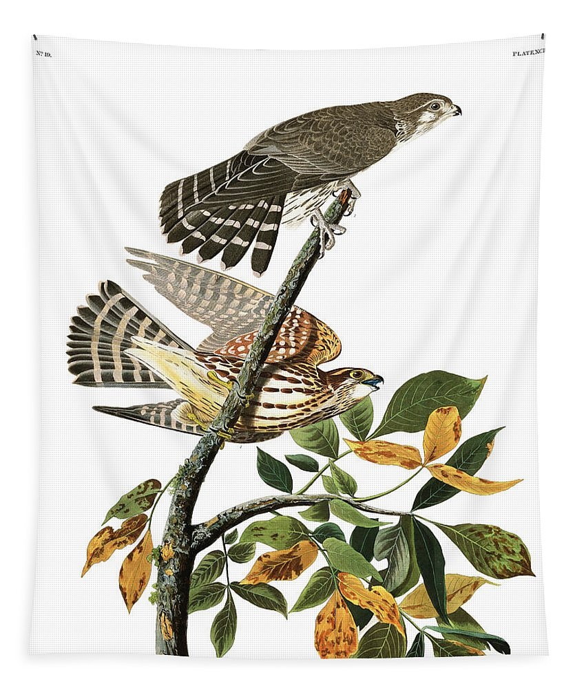 Pigeon Hawk Tapestry featuring the painting Pigeon Hawk by John James Audubon