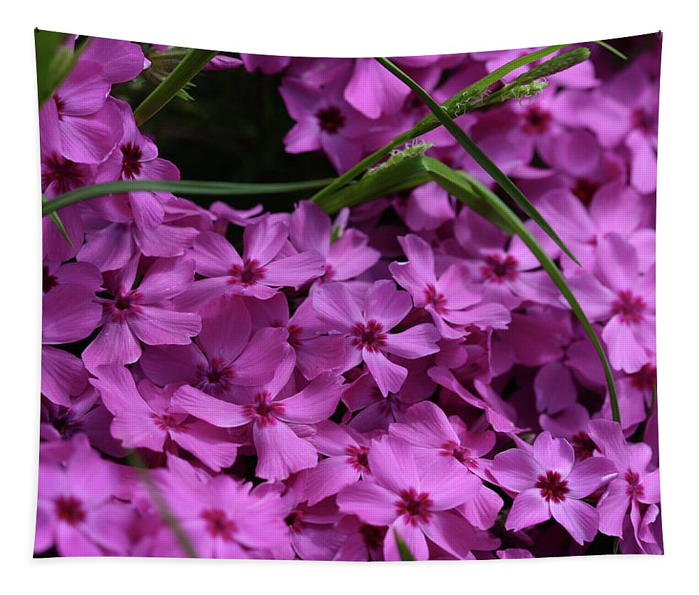 Flowers Tapestry featuring the photograph Pink Phlox by Michael Munster