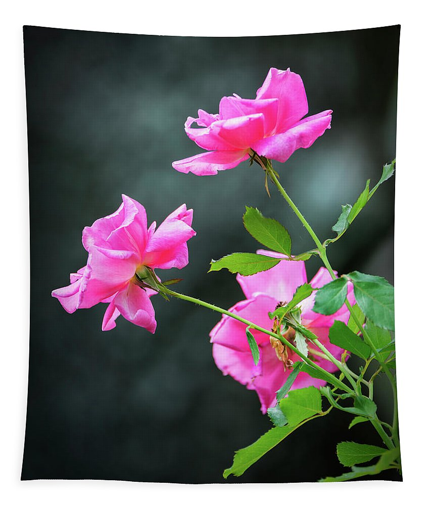 2d Tapestry featuring the photograph Pink Roses by Brian Wallace