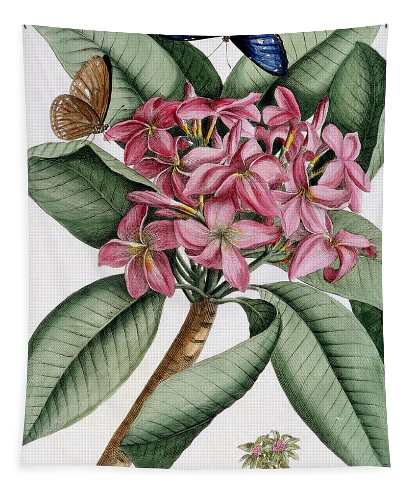 Text Tapestry featuring the painting Plumeria by Georg Dionysius Ehret