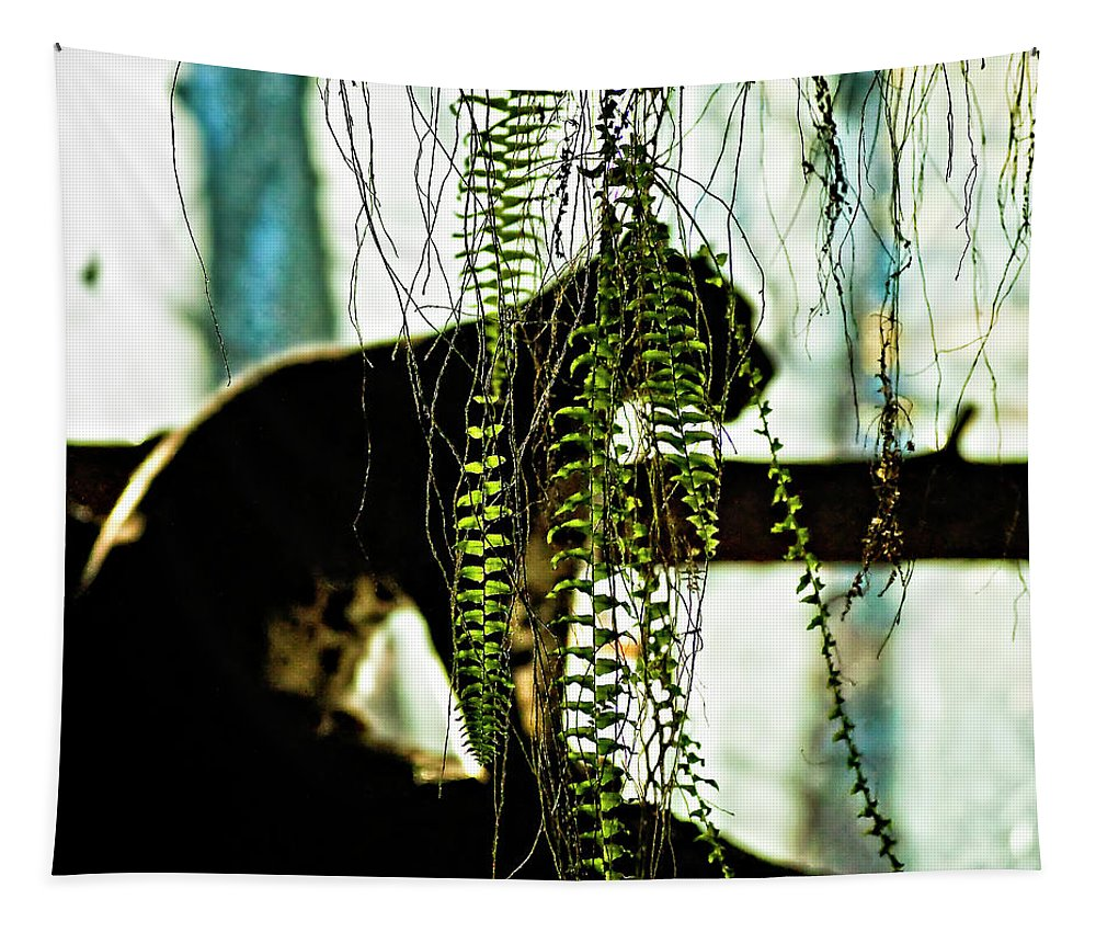 Clouded Leopard Tapestry featuring the photograph Predator by Steve Harrington