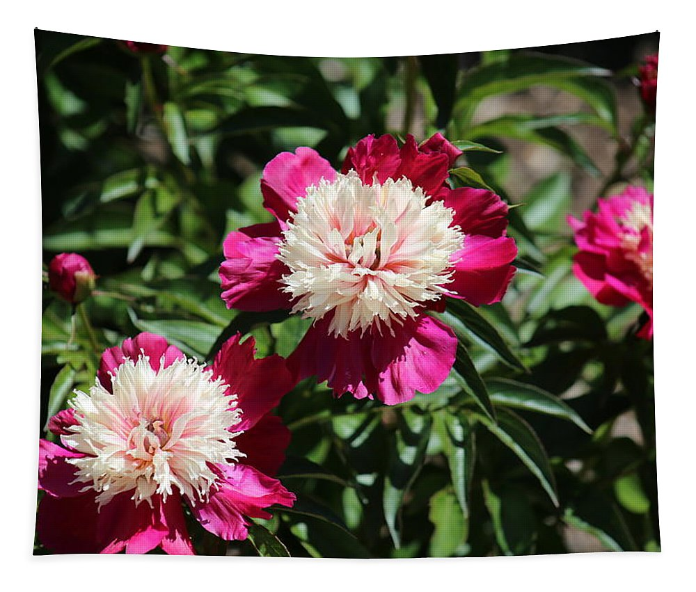 Flowers Tapestry featuring the photograph Red And Pink Peony by Michael Munster
