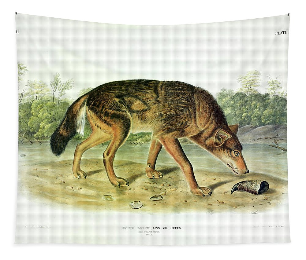 Red Texan Wolf Tapestry featuring the painting Red Texan Wolf by John James Audubon