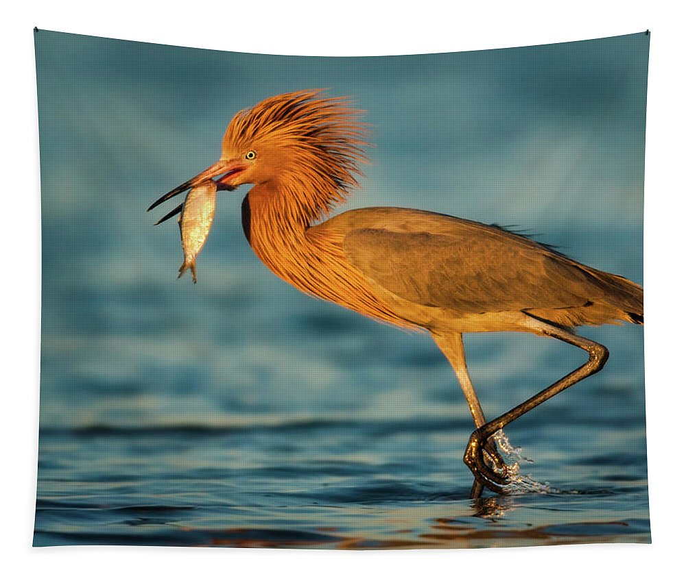 Avian Tapestry featuring the photograph Reddish Egret With Fish by Jerry Fornarotto