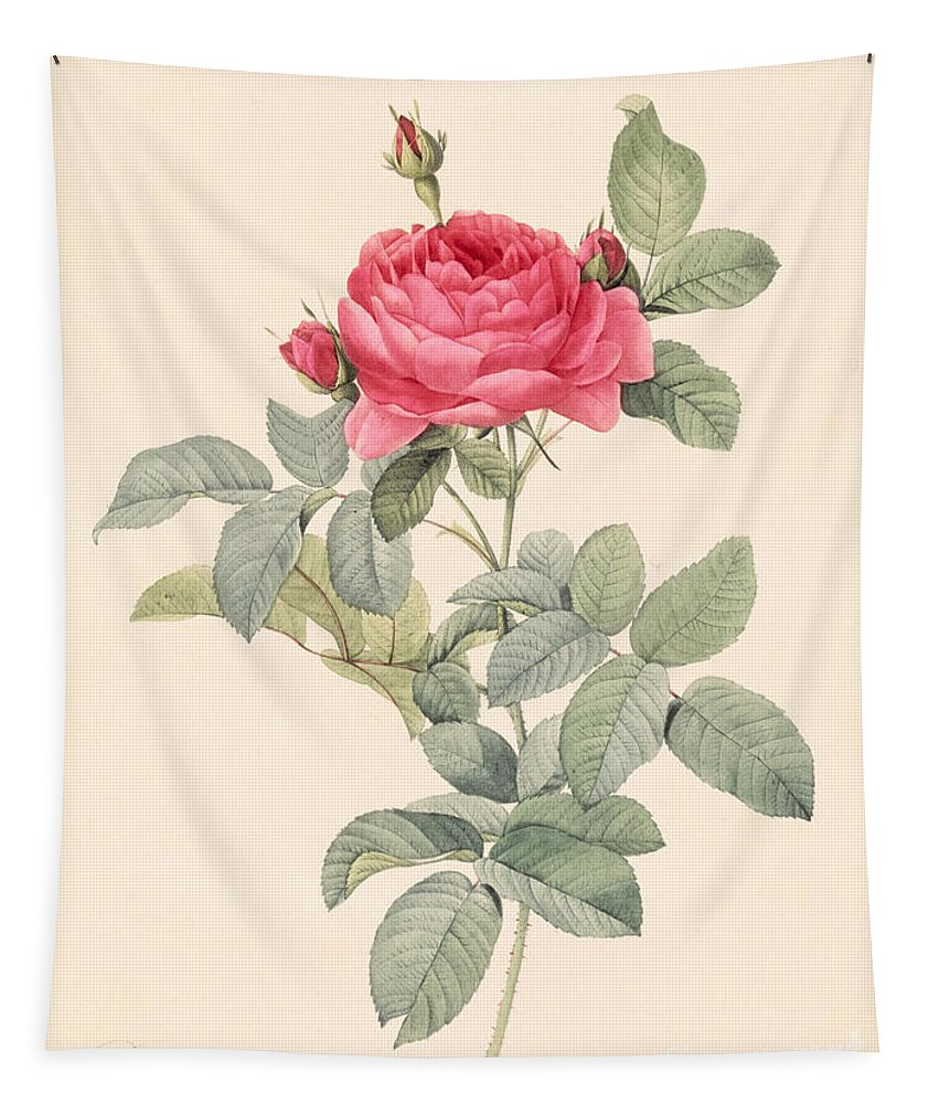 Rosa Tapestry featuring the drawing Rosa Gallica Pontiana by Pierre Joseph Redoute
