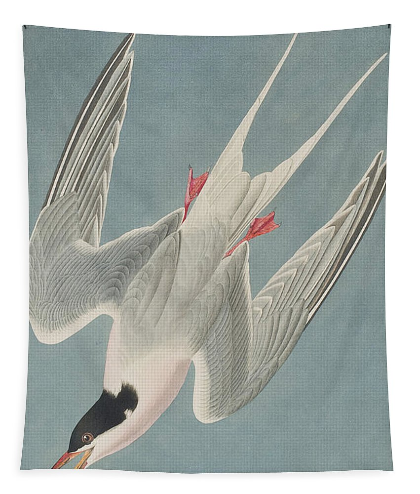Tern Tapestry featuring the painting Roseate Tern by John James Audubon