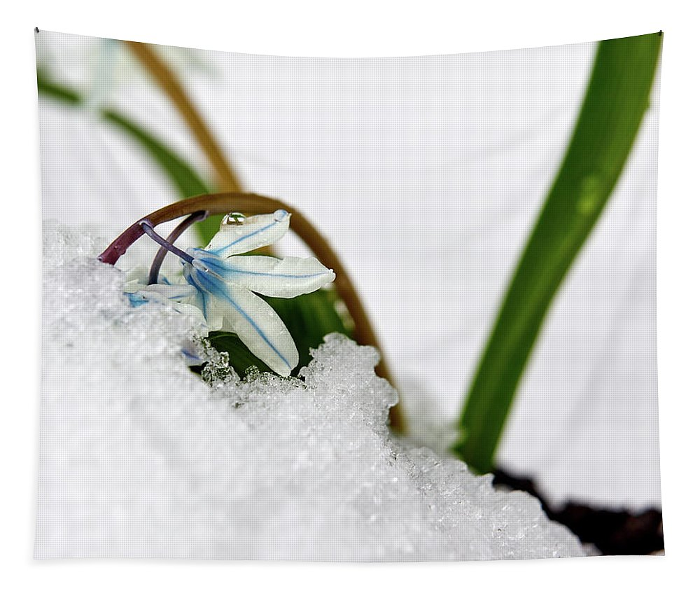 Finland Tapestry featuring the photograph Scilla On Snow by Jouko Lehto