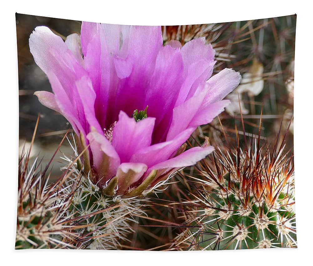 Engelmann's Hedgehog Cactus Tapestry featuring the photograph Soft And Hard by Laurel Powell