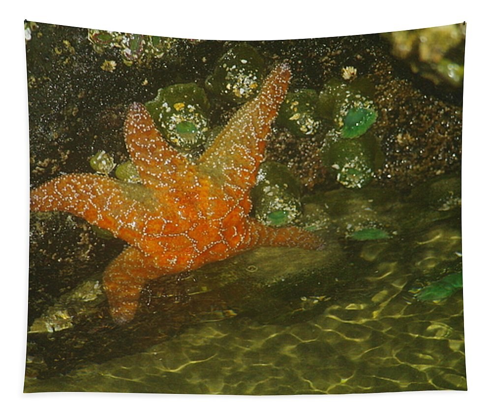 Starfish Tapestry featuring the photograph Starfish by Jeff Swan