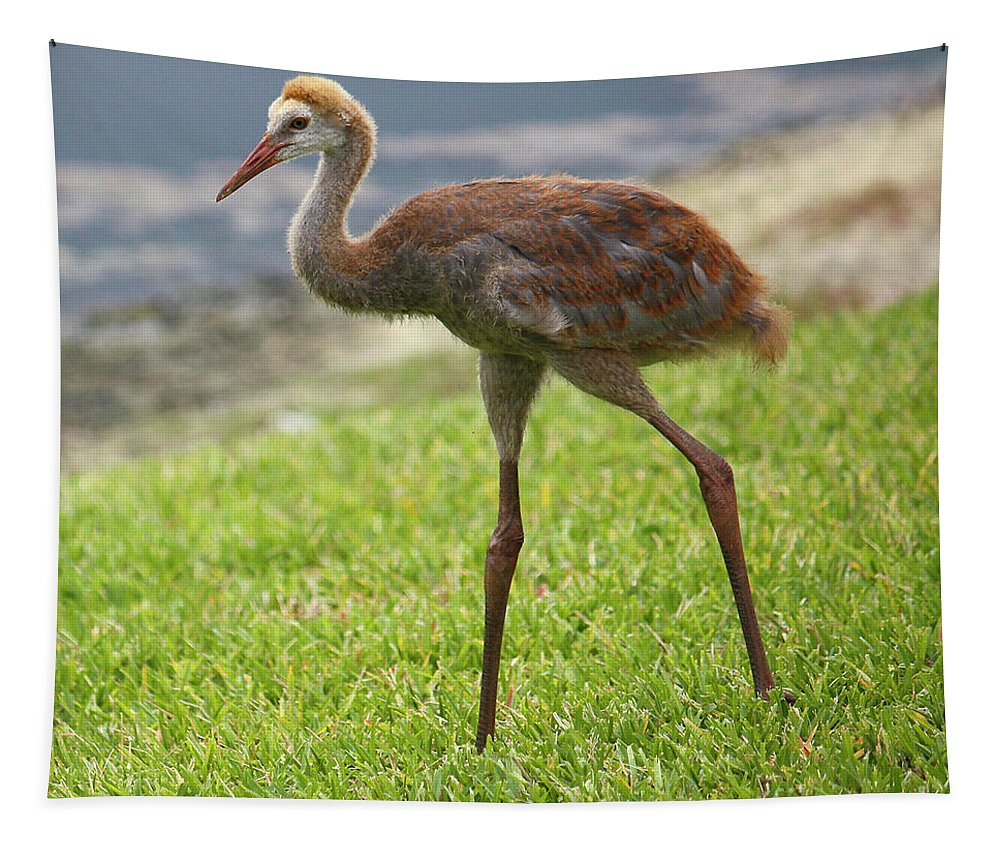 Beaks Tapestry featuring the photograph Sweet Juvenile Sandhill Crane by Carol Groenen