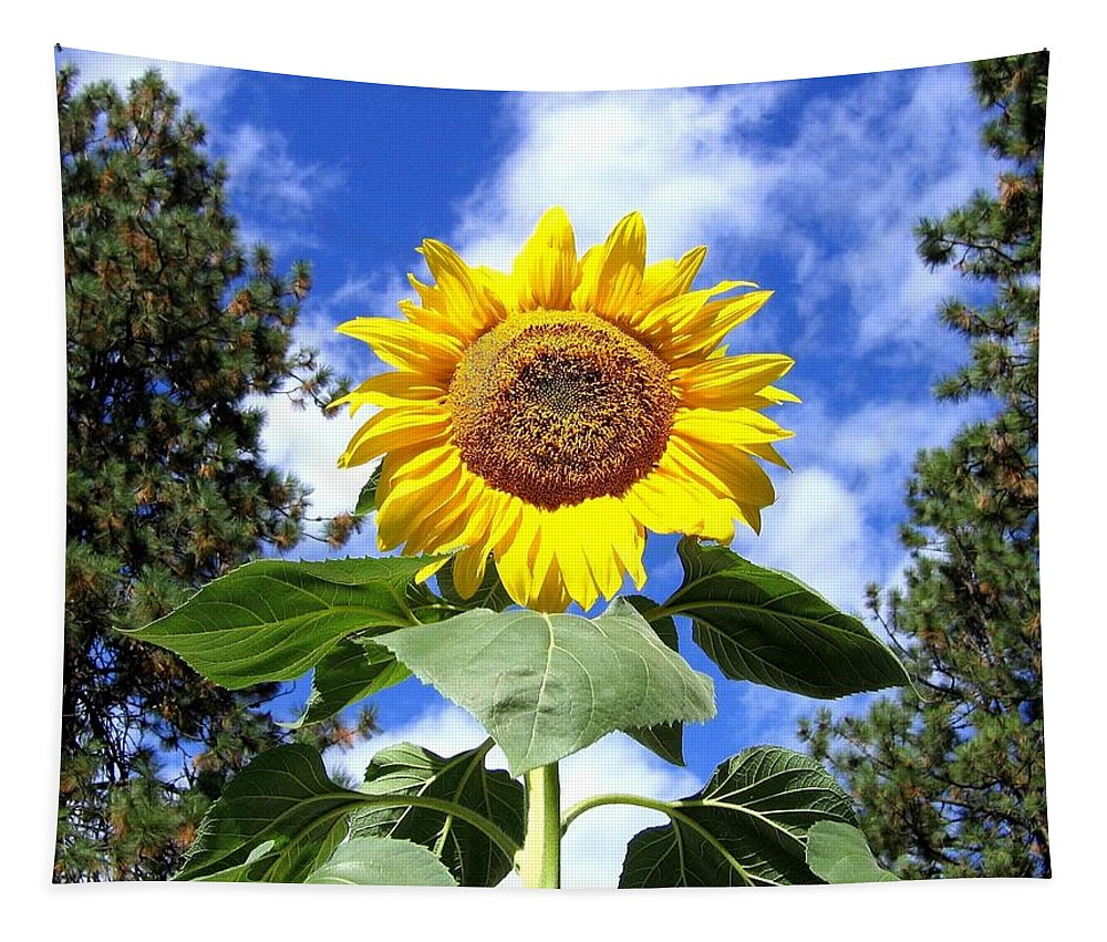 Sunflower Tapestry featuring the photograph Tall And Sunny by Will Borden