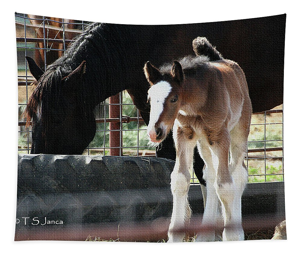 The Flying Colt With The Big White Feet Tapestry featuring the digital art The Flying Colt With The Big White Feet by Tom Janca