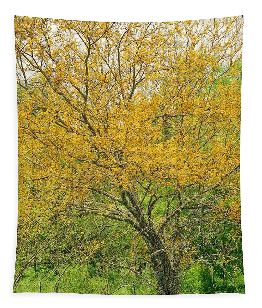 Leaning Tapestry featuring the photograph The Leaning Tree by Gary Richards
