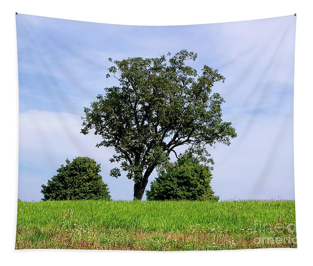 Tree Tapestry featuring the photograph Three Tree Hill by Madeline Ellis