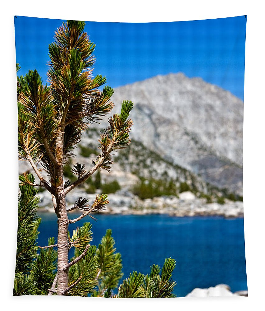 Treasured Pine Tapestry featuring the photograph Treasured Pine by Chris Brannen